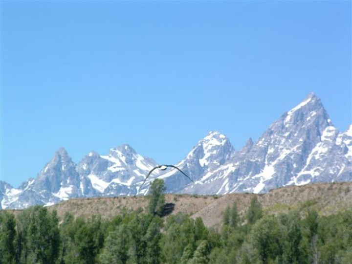 An eagle with the Mountain Range