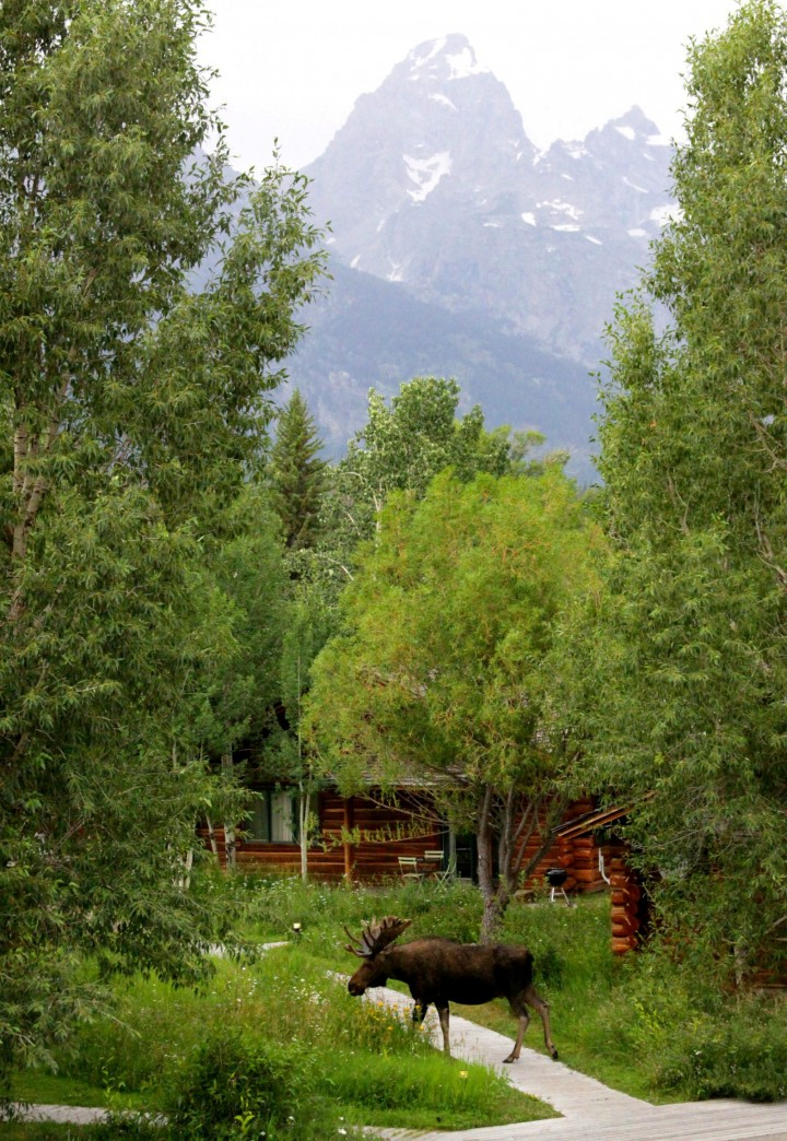 Dornan S Spur Ranch Log Cabins Jackson Hole
